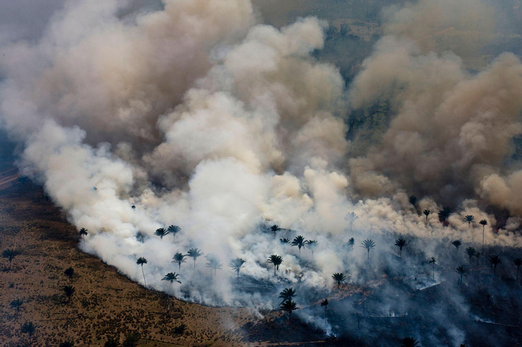 Il 2020 è stato catastrofico per l'Amazzonia